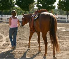 Lindsay Grice horse training
