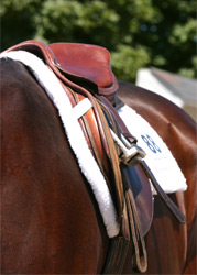 Lindsay Grice saddle